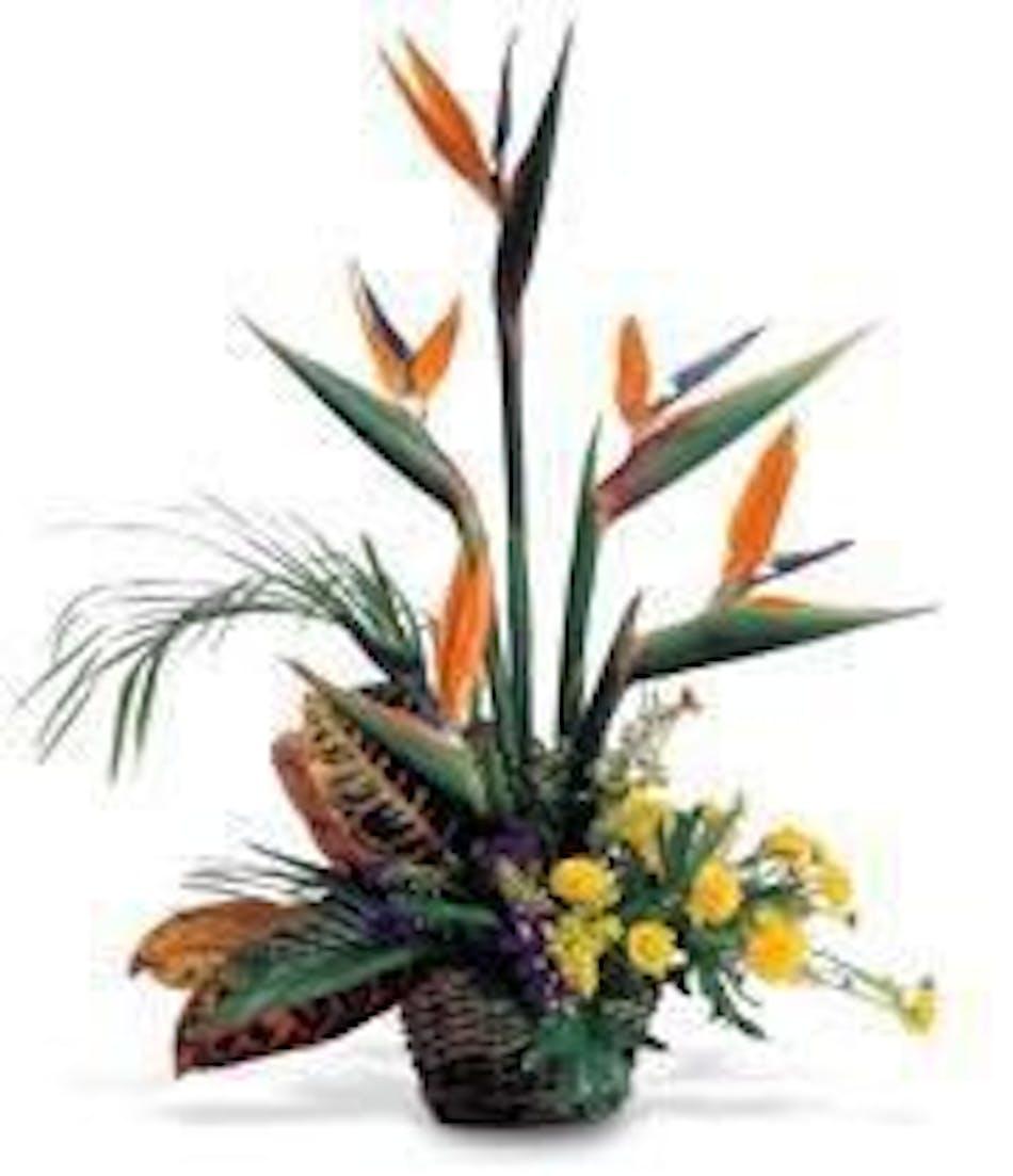 Tropical flowers cincinnati oh same day delivery adrian durban bird of paradise arrangement izmirmasajfo